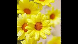 لغة الطبيعة 2 ورود صفراء Yellow Flowers Youtube