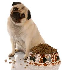 best dog food for pugs 2018 how to