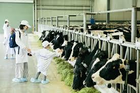 Vinamilk tổ chức cho con em nhân viên thăm resort bò sữa ...