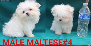 louisiana free clifieds pets free ads