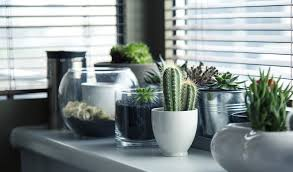 How To Grow A Cactus Desert Glamour On Your Windowsill The Handy Mano