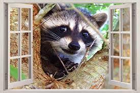 Amazon Com Raccoon 3d Window Decal Wall Sticker Home Decor Art Mural Animals J505 Giant Home Kitchen