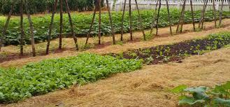 vegetable garden pathways