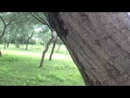 the rain of indian forest free video