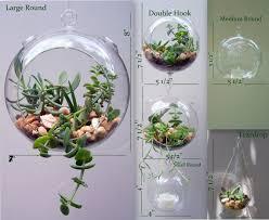 hanging glass terrarium extra large