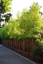 Affordable Wooden Fence Ideas For Trendy Outdoor Look Decortrendy