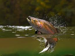 brook trout disered in once sterile