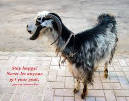 goat quotes and sayings quotes about goat