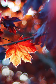 autumn leaves iphone 4s wallpapers free