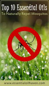 essential oils for mosquito repellent