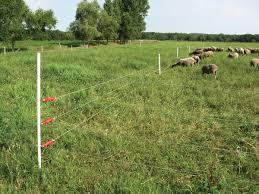 Electric Fencing Basics Livestock Fence Electric Fence Sheep Fence