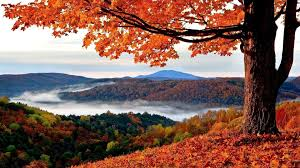 1920x1080 hd autumn wallpapers 61 images
