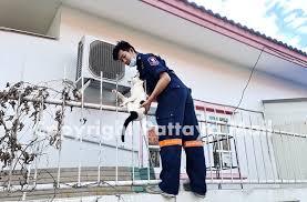 Cat Blows Landing Impales Leg On Spike Pattaya Mail