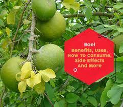 bael 7 impressive benefits of bael