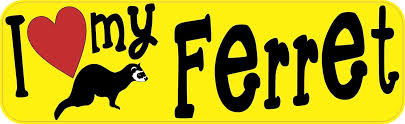 10in X 3in I Love My Ferret Bumper Sticker Vinyl Truck Window Car Decal Bumper Stickers Car Decals Vinyl Sticker