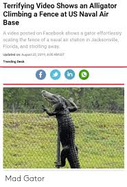 Terrifying Video Shows An Alligator Climbing A Fence At Us Naval Air Base A Video Posted On Facebook Shows A Gator Effortlessly Scaling The Fence Of A Naval Air Station In Jacksonville
