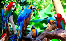 macaw wallpaper picserio