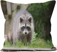 Amazon.com: Nine City Raccoon Member of Carnivora Order of Mammals ...
