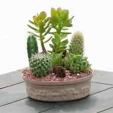 small cactus garden indoor office