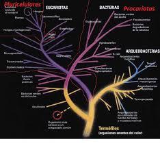 Cómo clasificar los seres vivos: cladística o niveles de complejidad - AECC  - Asociación Española de Comunicación Científica | AECC – Asociación  Española de Comunicación Científica