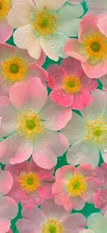 flower wallpapers hd for phone