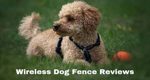 The Most Comprehensive Wireless Dog Fence Reviews 2020 Herepup