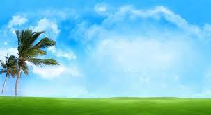 42 windy palm sky blue best image hd