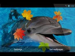 dolphin 3d live wallpaper you