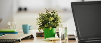Choosing The Best Plants For Your Desk   Improving Your Office Space - The  Professional Centre