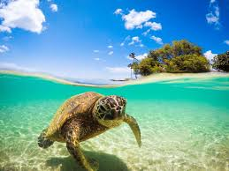 sea turtle laptop wallpapers top free