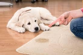 bladder stones in dogs symptoms