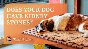 bladder kidney stones