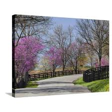 Road Lined With Redbud And Dogwood Trees In Full Bloom Lexington Kentucky Usa Stretched Canvas Print Wall Art By Adam Jones Walmart Com Walmart Com