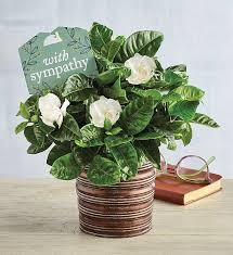 sympathy gardenia harry david