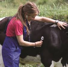 Techniques and Processors for Testing performance in Livestock Breeding