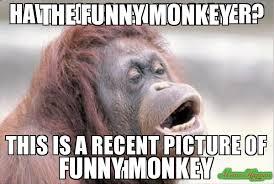 the funny monkey funny monkey meme