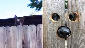 Neighbor S Nosy Dog Keeps Jumping To Look Over Fence So She Comes Up With A Hilarious Solution Familypet