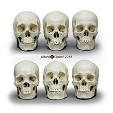 natural history gift ideas bone
