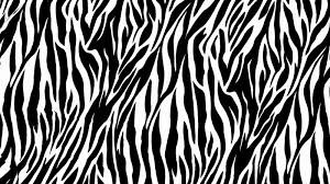 zebra printed wallpaper zebra print