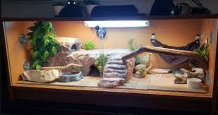10 best bearded dragon enclosure types