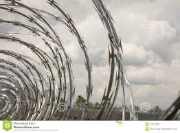 Coils Of Razor Wire On Fence Stock Photo Image Of American Barbed 118175260