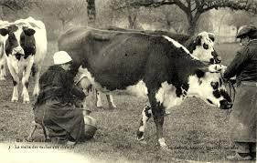 La vie aux champs (1945 à 1950) | Memoiresduncheminotduperche