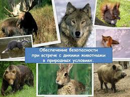 Шарковщина. Клiч Радзiмы - Как вести себя при встрече с дикими животными