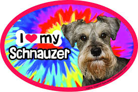 Amazon Com Prismatix Decal Schnauzer Car Magnets I Heart My Schnauzer Tie Dye Oval 6 X 4 Auto Truck Refrigerator Mailbox Funny Car Decals Dog Magnet Schnauzer Automotive