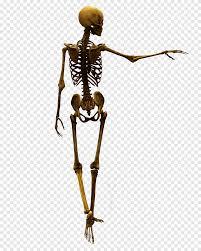الركوع هيكل عظمي هيكل عظمي العظام العظام عظم جمجمة Png
