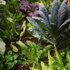 planting organic vegetables herbs and