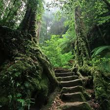 secret path | Nature, Beautiful nature, Landscape
