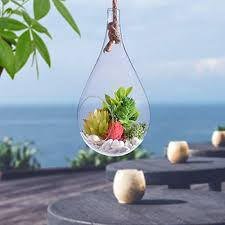 hanging glass terrarium small garden