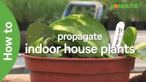 how to propagate indoor house plants