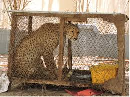 Fighting the heartbreaking trade in exotic pets   Foreign Office Blogs